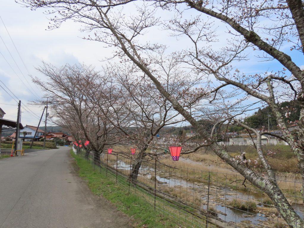 美波羅川千本桜開花状況(R3 3/25)
